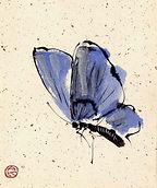 butterfly consapevolezza corpo e mente.j