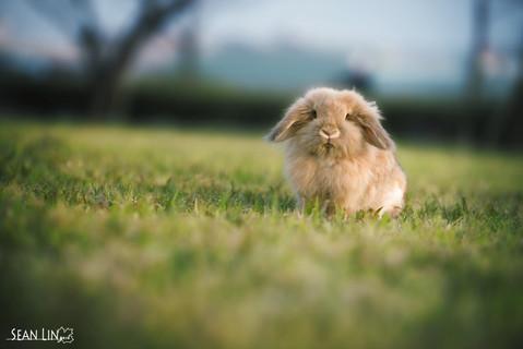 楓凌小徑/寵物寫真/寵物攝影/寵物外拍