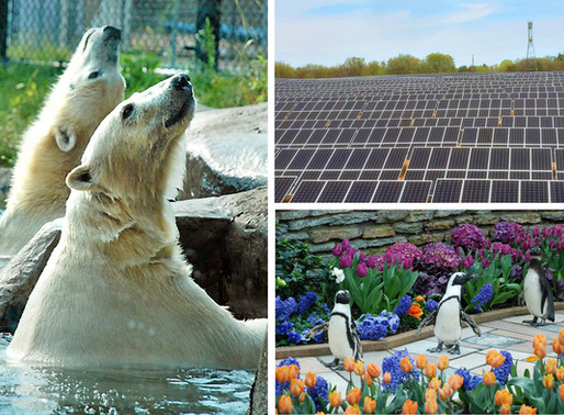 C2 Energy Capital and the City of St. Paul Partner on New Solar Energy Project for the Como Park Zoo