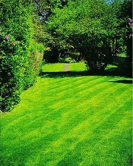 Nice Garden.JPG