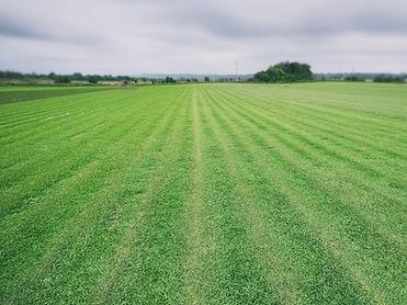 Large Field.jpg