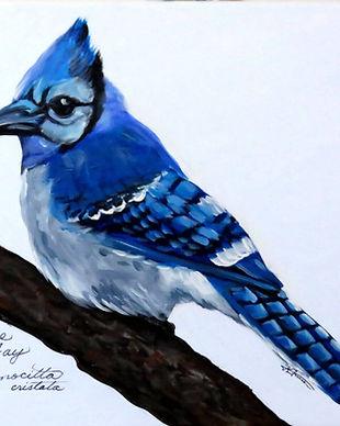 Blue-Jay.jpg