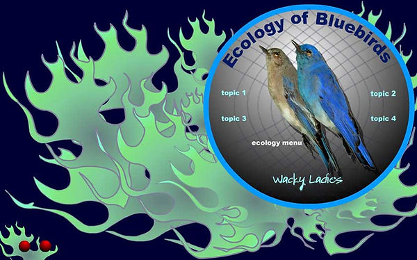 eco_bluebirds1.jpg