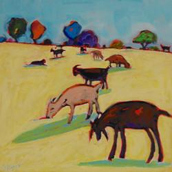 Meadow Goats