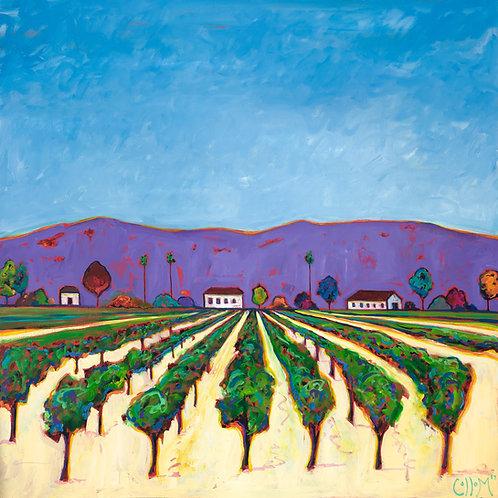 Purple Hills Vineyard