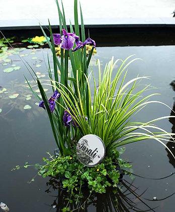 composizioni piante galleggianti