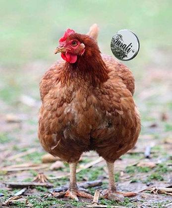 le nostre galline