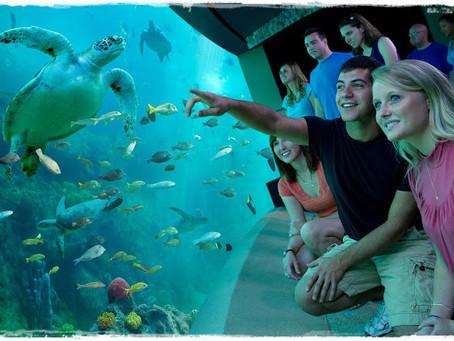 Descubra a vida marinha no SeaWorld