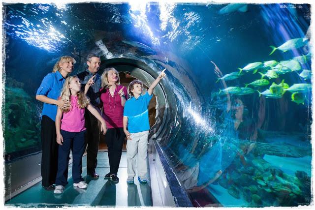 O mundo marinho no Sea Life Aquarium