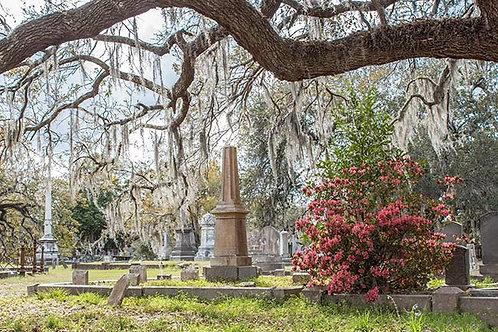 Spirits of Magnolia Cemetery