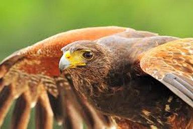 Center For Birds Of Prey