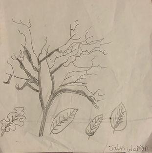 214JadynWarrenTrees.jpg