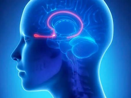 Anosmia e Parosmia pós Covid. O que voce precisa saber?