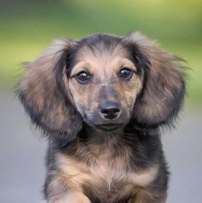 k9photo-puppy-1.jpg