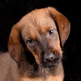 k9photo-puppy-3.jpg
