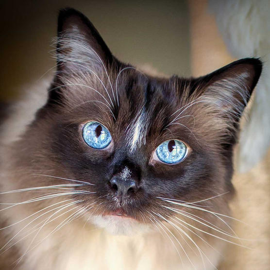 k9photo-cat-1.jpg