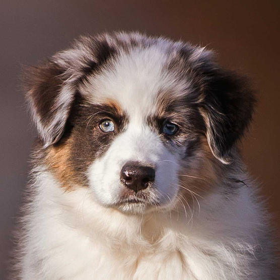 k9photo-puppy-2.jpg