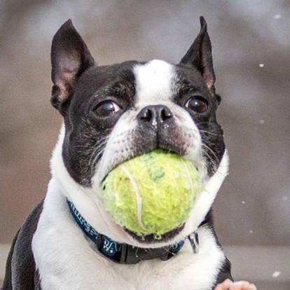 k9photo-dog-ball-1.jpg