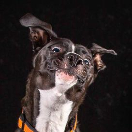 k9photo-dog-5.jpg