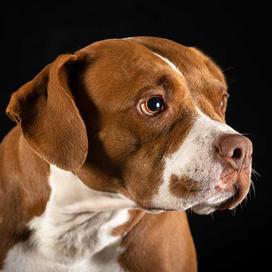 k9photo-dog-6.jpg