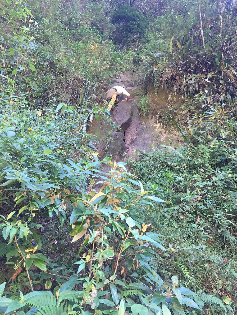 escalade dans la forêt pour rejoindre le Mont Putukusi, aventures et exploration de nouveaux endroits, pérou aguas calientes