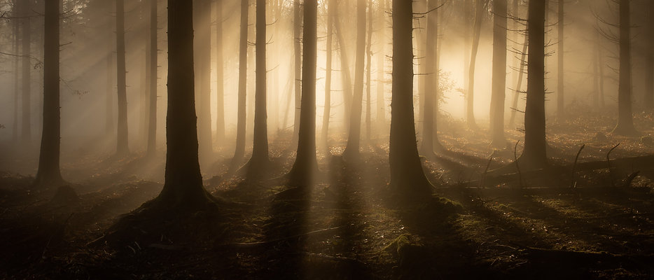 moody forest with sun rays