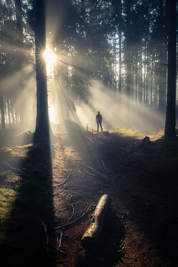 Sun rays in woodland