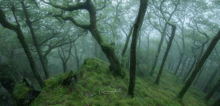 Nebelwald im Lake District.jpg