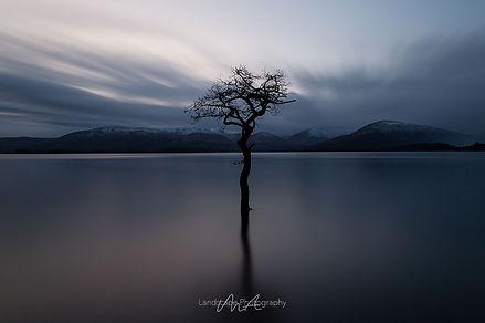 Lonely tree at Loch Lomond in Scotland