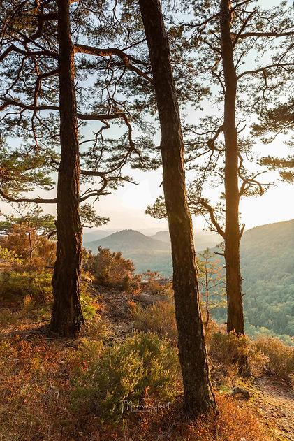 Big vista Palatine forest.jpg