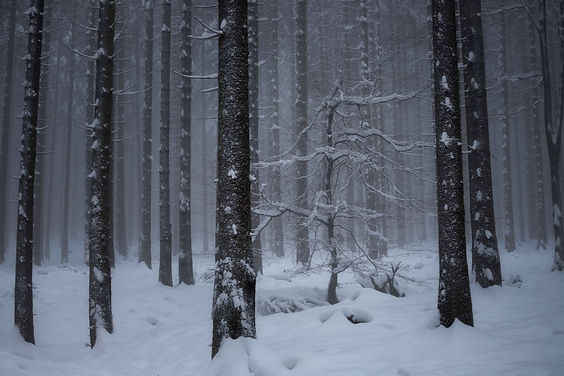 Verschneiter Wald im Taunus.jpg