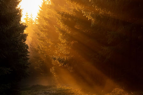Golden sun rays in woodland