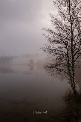 Tarn Hows trees in fog.jpg