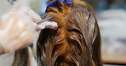 woman-with-hair-dye-in-beauty-salon-GQ8U