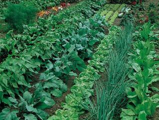 Secret Garden of Health