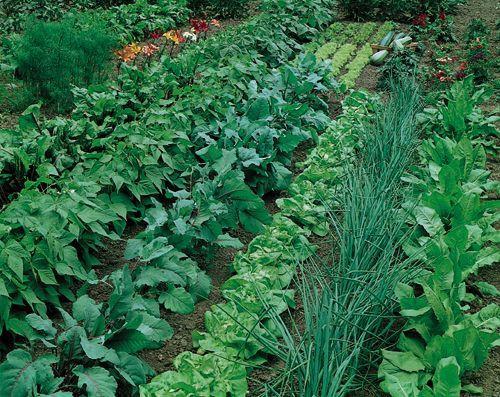 vegetable-garden-1.jpg