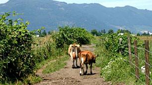 Happy cows produce healthy raw milk!