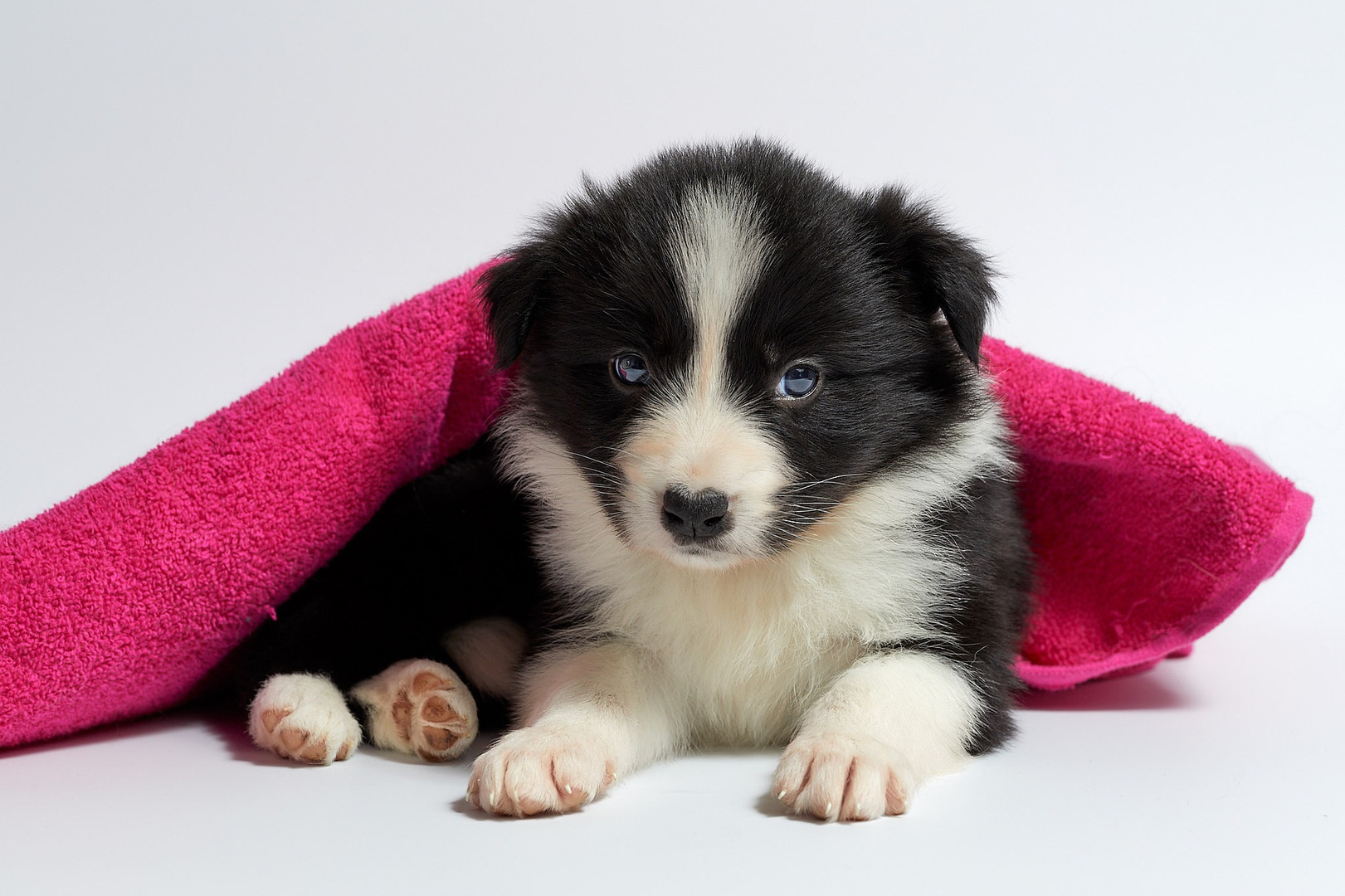 Education chiot