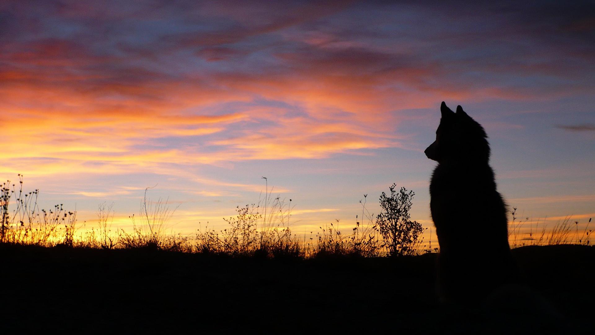Dressage chien