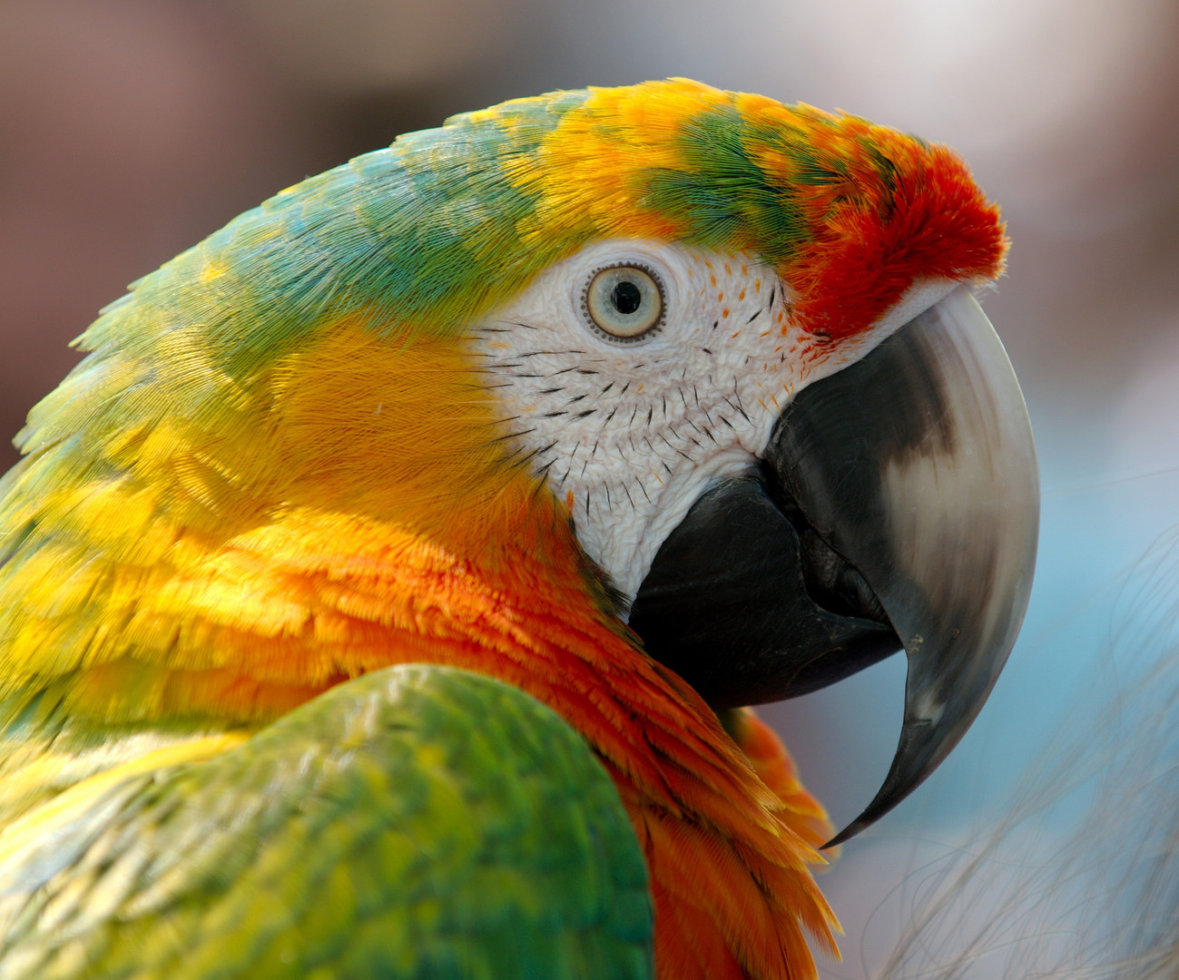 Comportementaliste perroquet 44