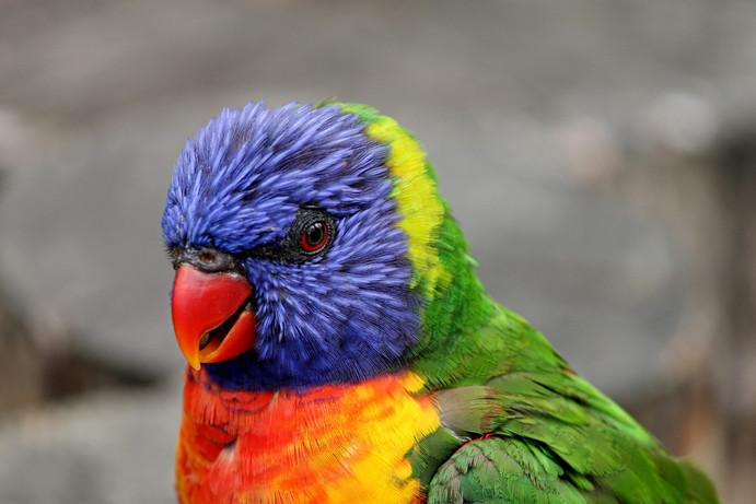 Problème comportement perroquet 44