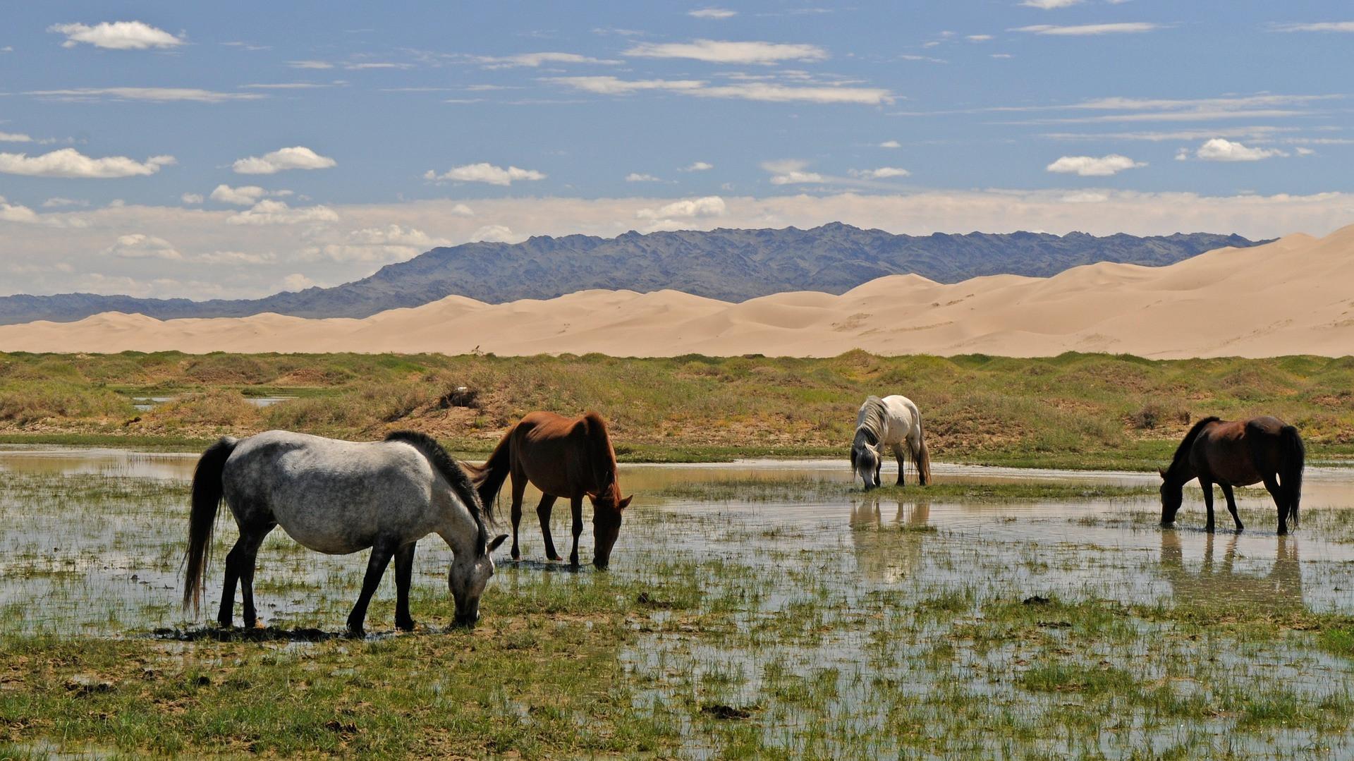 Comportementaliste chevaux 44