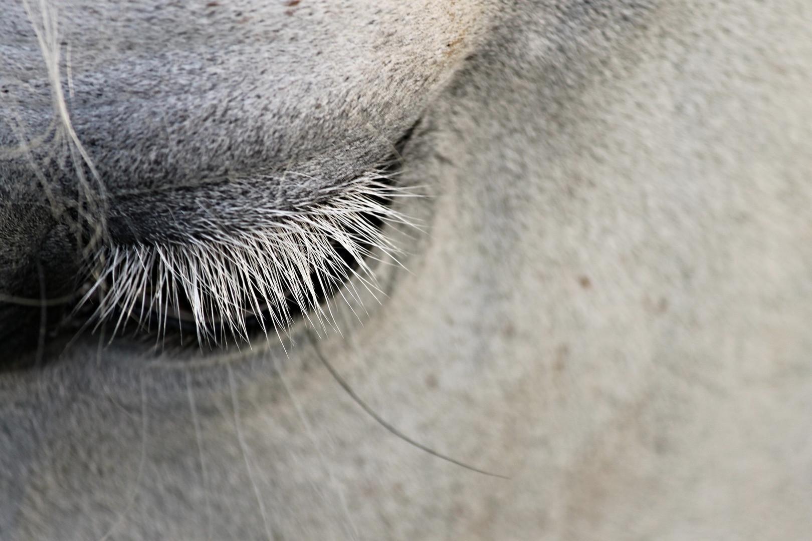 Comportementaliste chevaux Loire Atlantique