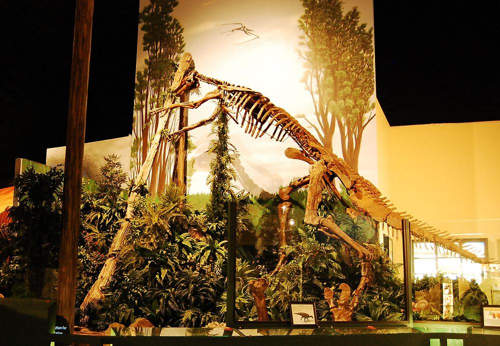 Mary Ann Hadrosaur