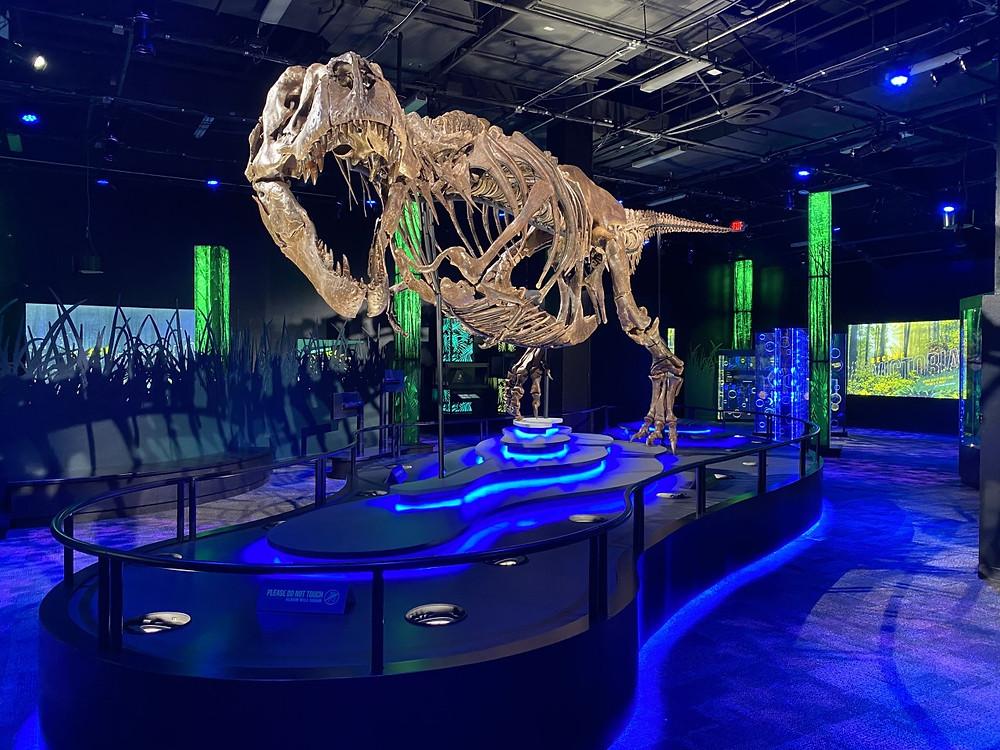 Victoria, the T. rex.