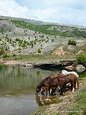 Dalmatia site (18).jpg
