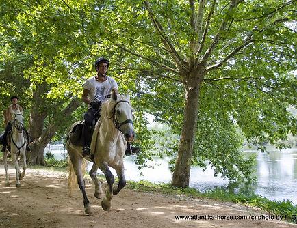 56-DSC_0594 Gallop along racecourse.jpg