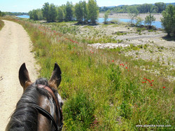 Cheval et nature site (3)