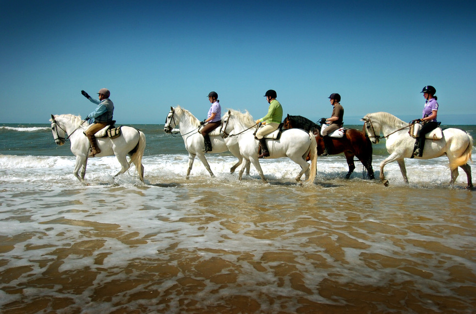 playa en el agua caballos tordos.JPG