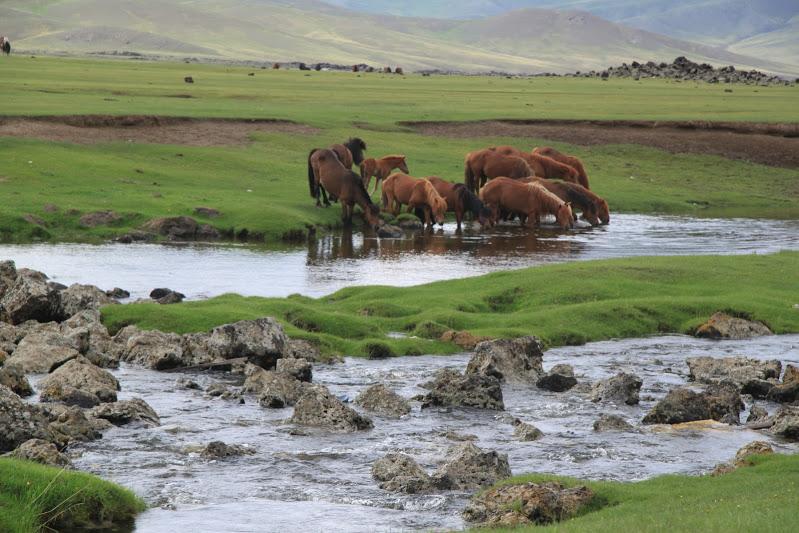 Конные туры в Монголии